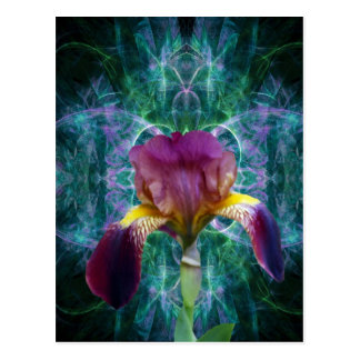 Iris and its meaning postcard