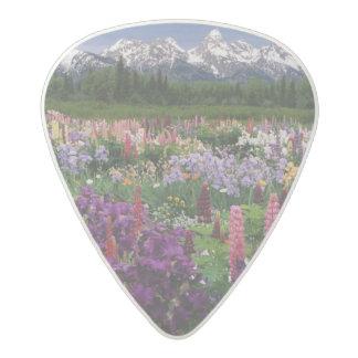 Iris and Lupine garden and Teton Range, Acetal Guitar Pick