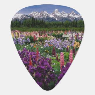 Iris and Lupine garden and Teton Range, Guitar Pick
