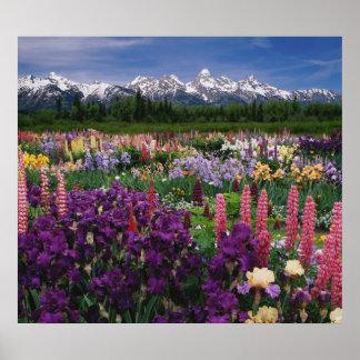 Iris and Lupine garden and Teton Range, Poster