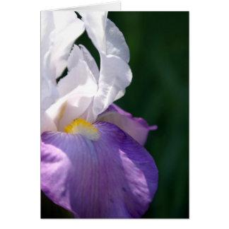 Iris Beauty Card