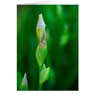 Iris Bud Card