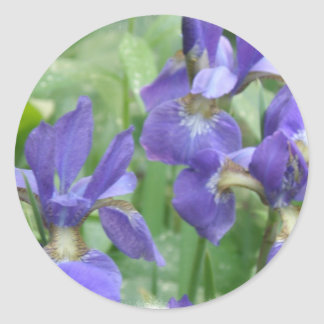 Iris Bulbs Stickers