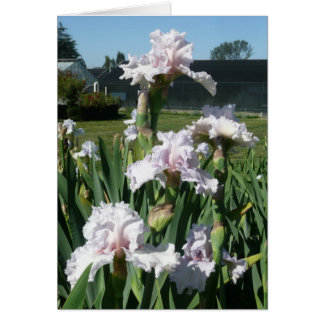 IRIS CARD - STAWBERRY FROSTING - Blank Note Card