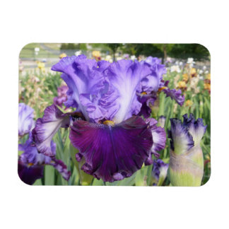 IRIS FLOWER MAGNET Horizontal