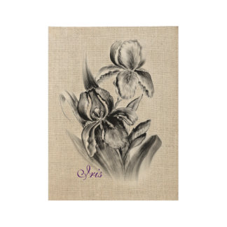 Iris Flower sketch charcoal Wood Poster
