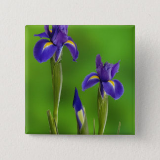 Iris Flowers 15 Cm Square Badge