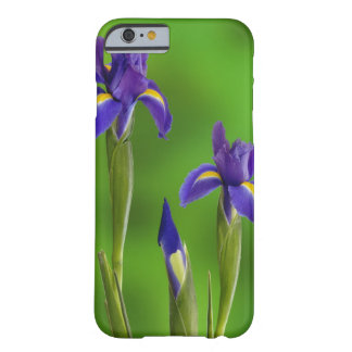 Iris Flowers Barely There iPhone 6 Case