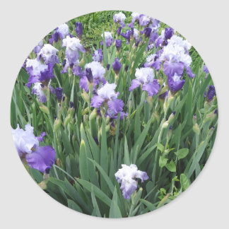 Iris flowers classic round sticker