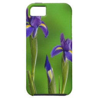 Iris Flowers iPhone 5 Cases