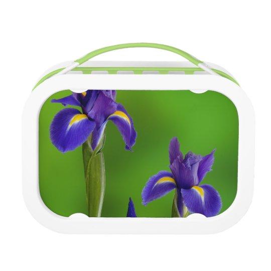 Iris Flowers Lunch Box