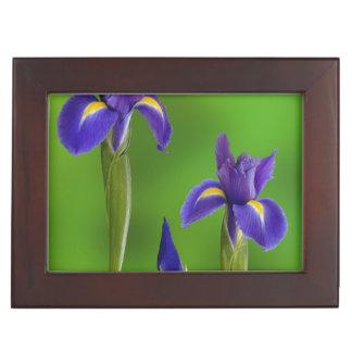 Iris Flowers Memory Boxes