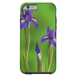 Iris Flowers Tough iPhone 6 Case