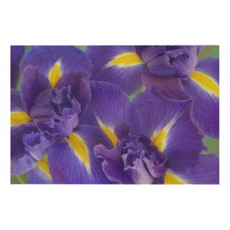 Iris flowers wood prints