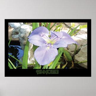 """Iris & Fountain"" - Print (No Shadow)"