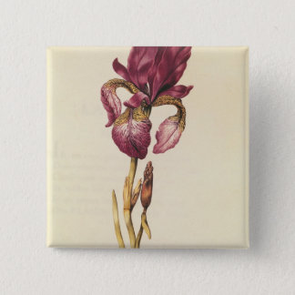 Iris, from 'La Guirlande de Julie', c.1642 15 Cm Square Badge