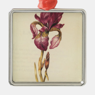 Iris, from 'La Guirlande de Julie', c.1642 Christmas Ornament