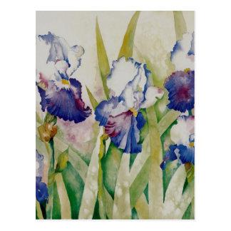 iris garden 2 postcard