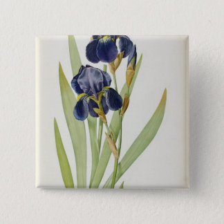 Iris Germanica, from `Les Liliacees', 1805 15 Cm Square Badge