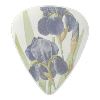 Iris Germanica, from `Les Liliacees', 1805 Acetal Guitar Pick