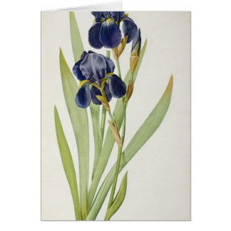 Iris Germanica, from `Les Liliacees', 1805 Card