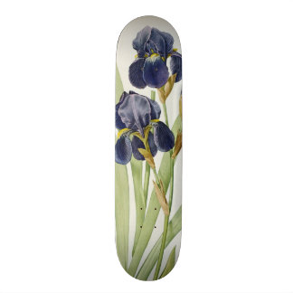 Iris Germanica, from `Les Liliacees', 1805 Custom Skate Board