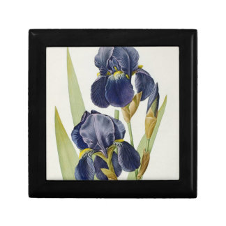 Iris Germanica, from `Les Liliacees', 1805 Small Square Gift Box