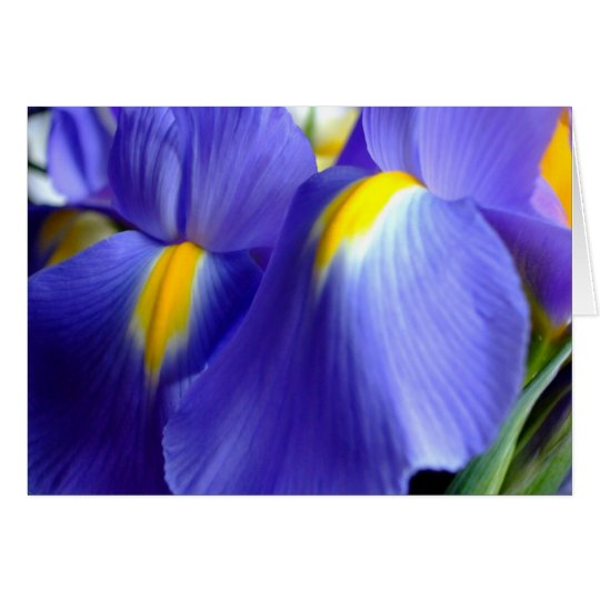 Iris Happy Birthday Card