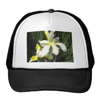 iris trucker hat