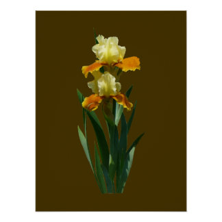Iris Honey Glazed Poster
