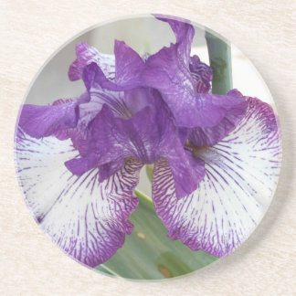 iris in bloom coaster