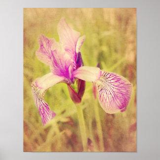 Iris In Pink Poster
