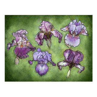 Iris in Purple Post Cards