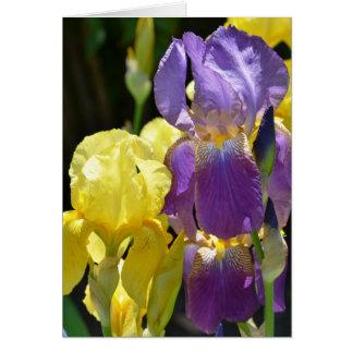 Iris in Spring Greeting Card