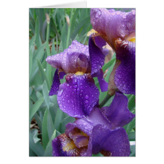 Iris in the rain greeting card