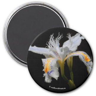Iris Japonica in the Spotlight Magnet