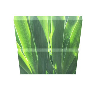 Iris Leaves Canvas Print