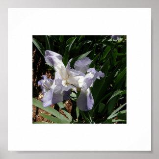 Iris Lighting Poster
