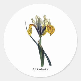 Iris Lusitanica Round Sticker