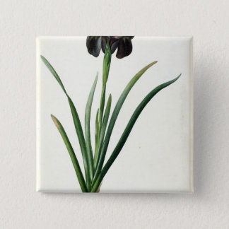 Iris Luxiana, from `Les Liliacees', 1805 15 Cm Square Badge