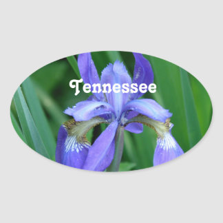 Iris Oval Sticker
