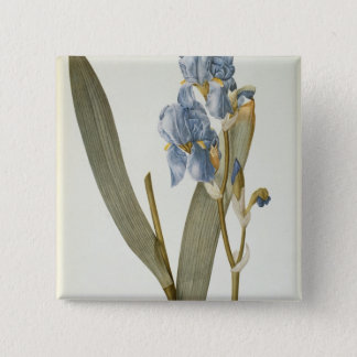 Iris Pallida, from `Les Liliacees', 1812 15 Cm Square Badge