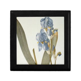 Iris Pallida, from `Les Liliacees', 1812 Gift Box