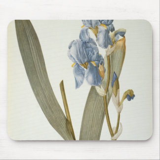 Iris Pallida, from `Les Liliacees', 1812 Mouse Mat