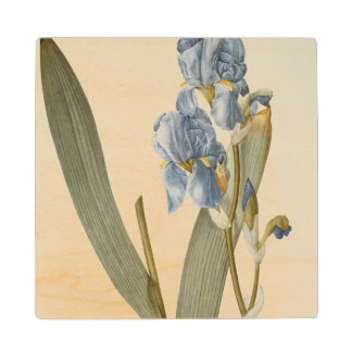 Iris Pallida, from `Les Liliacees', 1812 Wood Coaster
