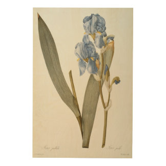 Iris Pallida, from `Les Liliacees', 1812 Wood Wall Decor