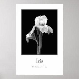 'Iris' Poster