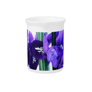 Iris Reticulata  Pitcher