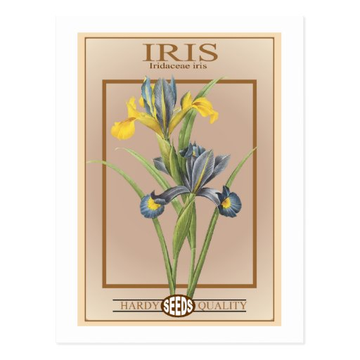 iris seed packet post cards