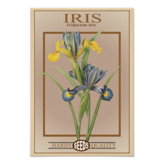 iris seed packet poster